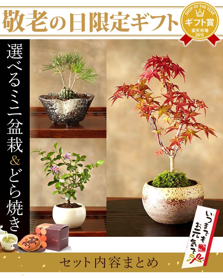 出典:http://item.rakuten.co.jp/oimoya/50755/
