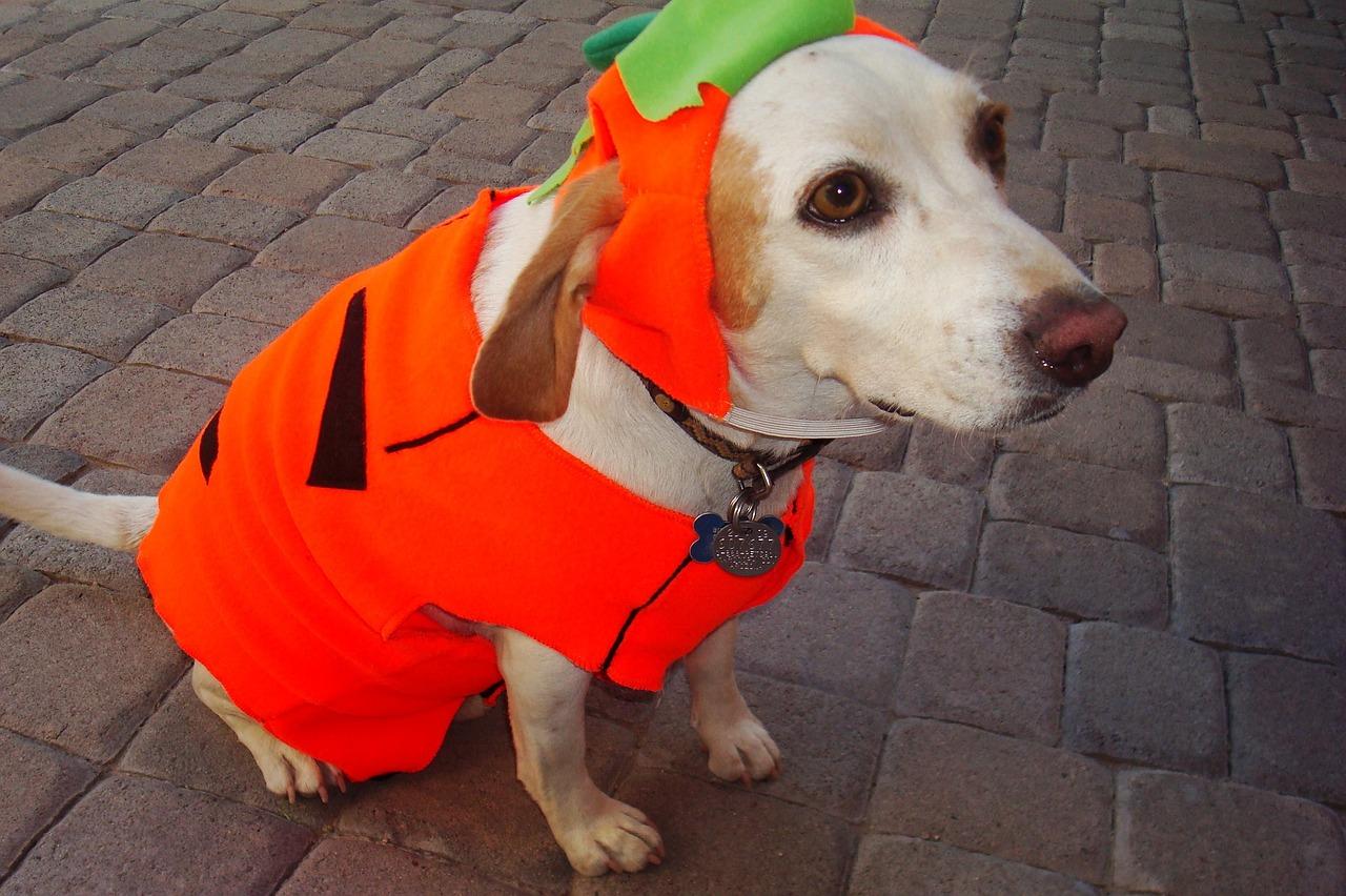 pumpkin-costume-988866_1280